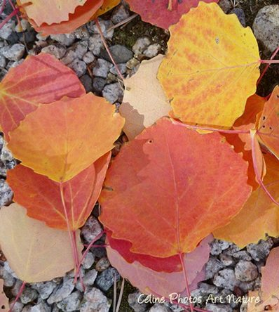 Automne 2015 de Céline Photos Art Nature
