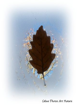 Automne 2017 de Céline Photos Art Nature