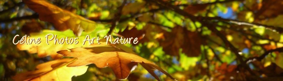Bannière automne 2013 de Céline Photos Art Nature