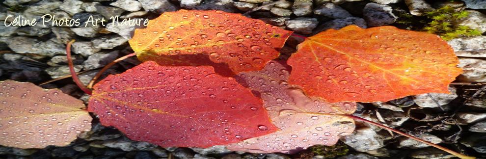 Bannière automne 2016 de Céline Photos Art Nature