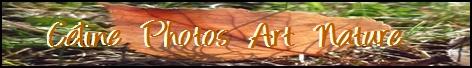 Bannière automne