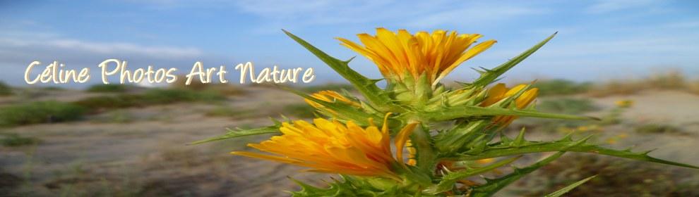 Bannière été 2014 de Céline Photos Art Nature