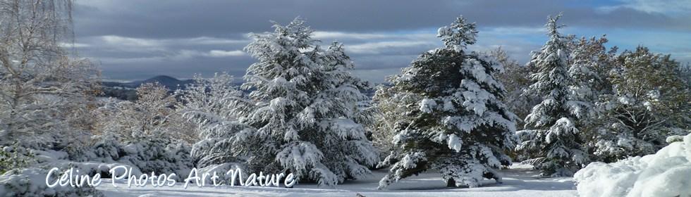 Bannière hiver 2013 de Céline Photos Art Nature