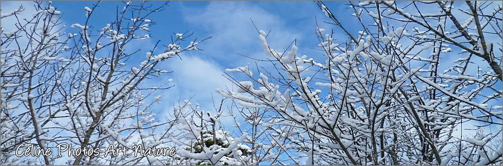 Bannière hiver 2015 2016 de Céline Photos Art Nature