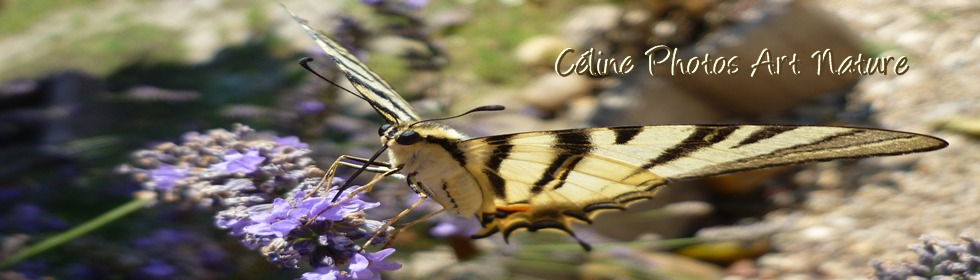 Bannière papillon de Céline Photos Art Nature