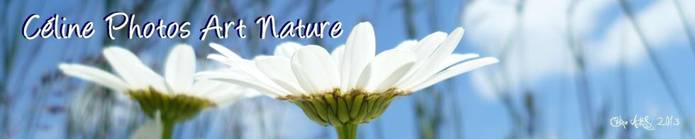 Bannière fleurs de Céline Photos Art Nature