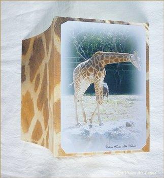 Carte double Girafes de Céline Photos Art Nature