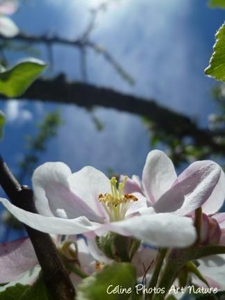 Carte double de nature avec des fleurs de pommier