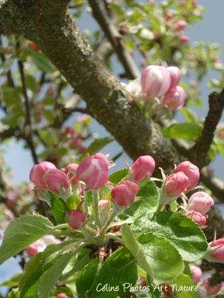 Carte double de nature avec des fleurs de cerisier