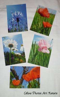 Lot de 5 cartes postales de Céline Photos Art Nature sur les fleurs