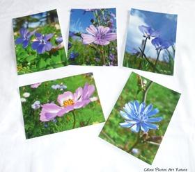 Lot de cartes postales de Céline Photos Art Nature sur les fleurs
