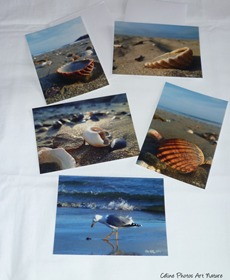 Lot de cartes postales de Céline Photos Art Nature sur la mer et les coquillages