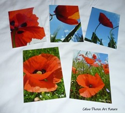 Lot de 5 cartes postales de Céline Photos Art Nature sur les coquelicots