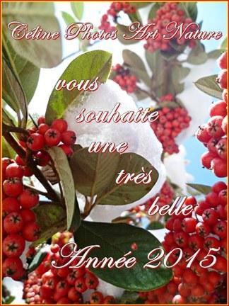 Carte bonne année 2015 de Céline Photos Art Nature