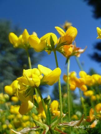 Carte double de nature avec des fleurs de trèfle