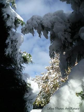 Photo d`un coeur de neige par Céline Photos Art Nature
