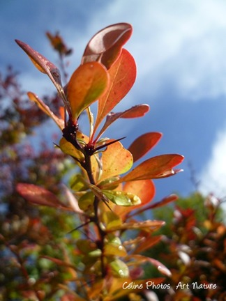 Feuillage d`automne après la pluie