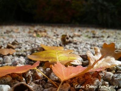 Feuilles d`automne qui tombent