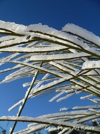 Buisson couvert de neige hiver 2013 photo de Céline Photos Art Nature