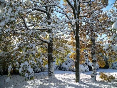 Feuilles d`automne et neige