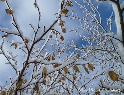 Paysage enneigé photo de Céline Photos Art Nature hiver 2013 2014