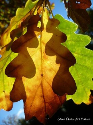 Photo de feuilles d`automne de Céline Photos Art Nature qui créent des ombres chinoises