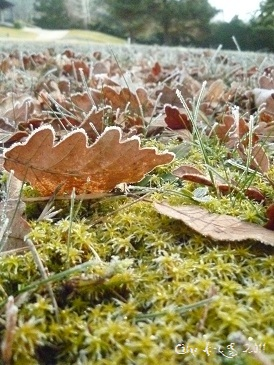 Photo du site Céline Photos Art Nature d`herbe et de feuilles givrées tout en transparence et brillance avec le lever su soleil de février.