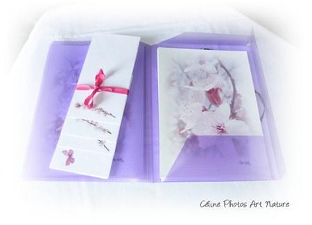 Papier à lettres fleurs roses de Céline Photos Art Nature