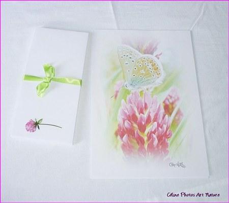 Papier à lettres vert et rose de Céline Photos Art Nature