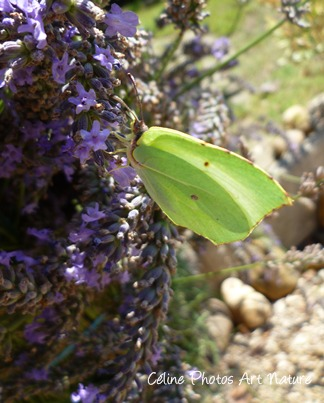 Papillon feuille 2013