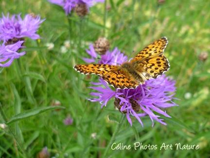 Papillon léopard