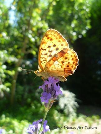 Papillon lumière 2013