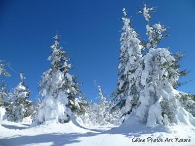 Paysage de neige 2015 de Céline Photos Art Nature