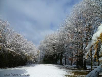 Paysage de sous-bois enneigé photo de Céline Photos Art Nature