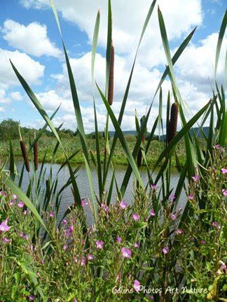 Petit lac d`Auvergne été 2015 de Céline Photos Art Nature