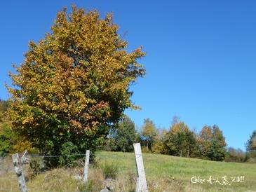 Paysage d`automne