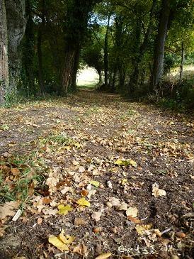 Sous-bois d`automne