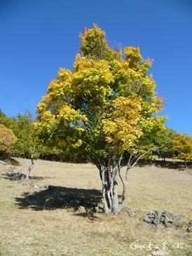 Arbre aux couleurs d`automne