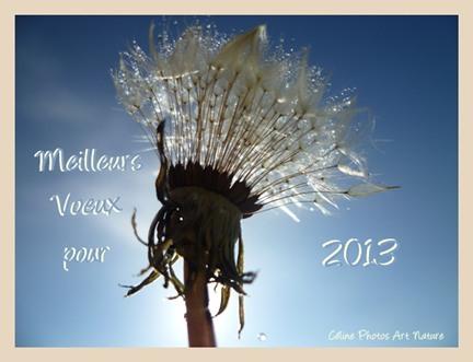 carte de voeux bonne année