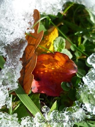 Photo d`automne