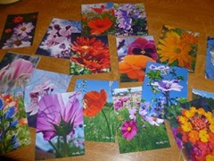 Lot de 10 cartes doubles personnalisables de Céline Photos Art Nature 10.5x15cm