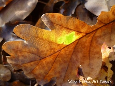 Poster de feuille d`automne 80x60cm à partir d`une photo de Céline Photos Art Nature