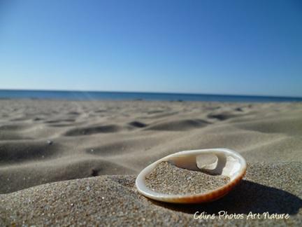 Poster de mer et de coquillages en été