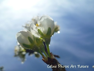 Printemps 2016 de Céline Photos Art Nature