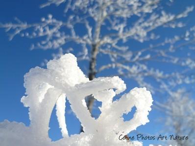 Sculpture naturelle de neige dans un paysage d`hiver photographie de Céline Photos Art Nature