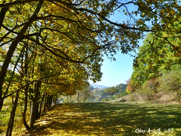 Tableau automne