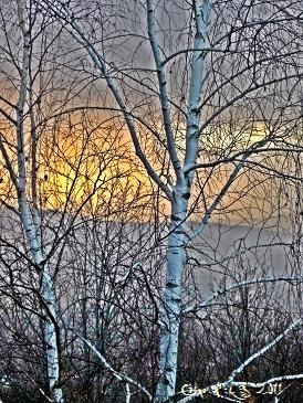 Photo de Céline Photos Art Nature transformée en tableau en jouant sur les couleurs.